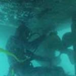 diving_1-434x265